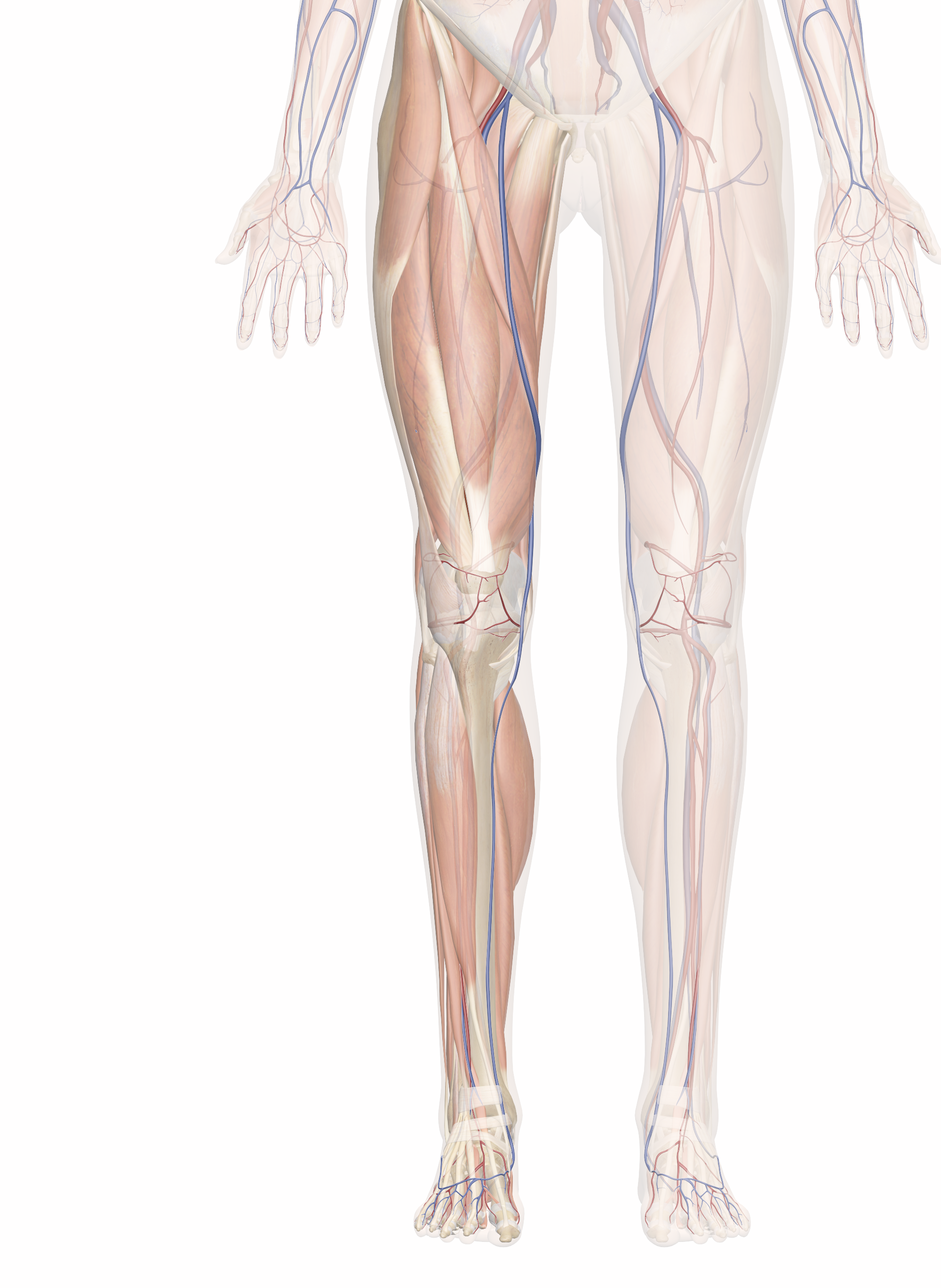 Conditions of Legs